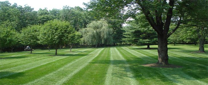 lawn-service